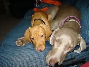 Kona got a puppy